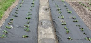 Плевелите - естествени средства за борба с тях с дълготраен ефект