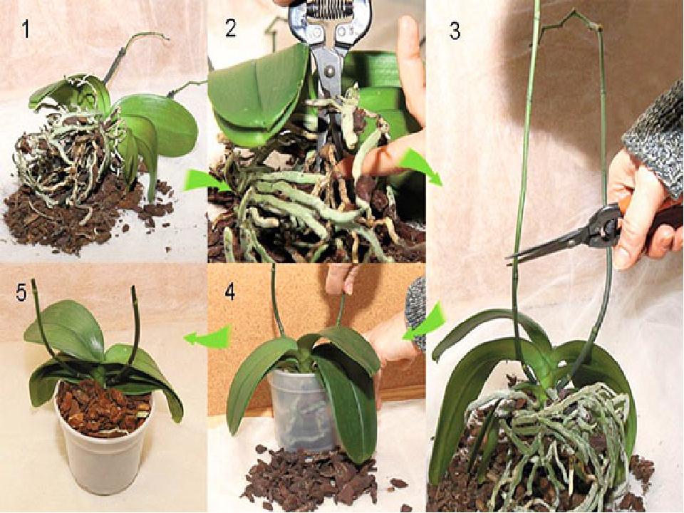Пресаждане на орхидея