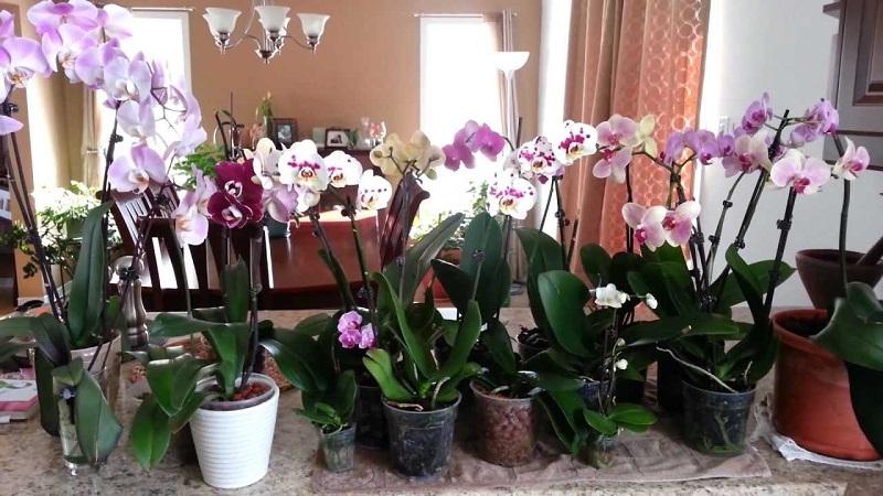 как правилно да храним орхидеите