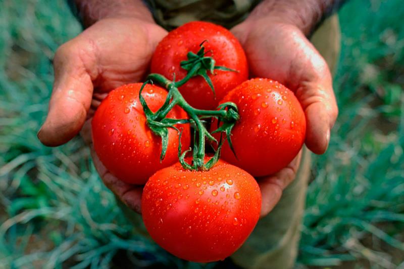 консервиране на домати през зимата