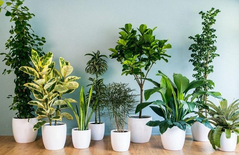 поливане на стайни растения