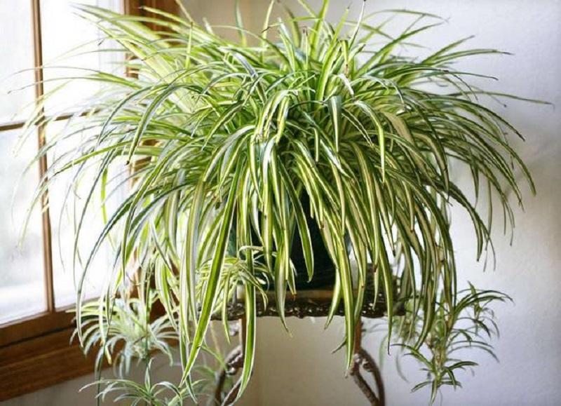 полезни растения