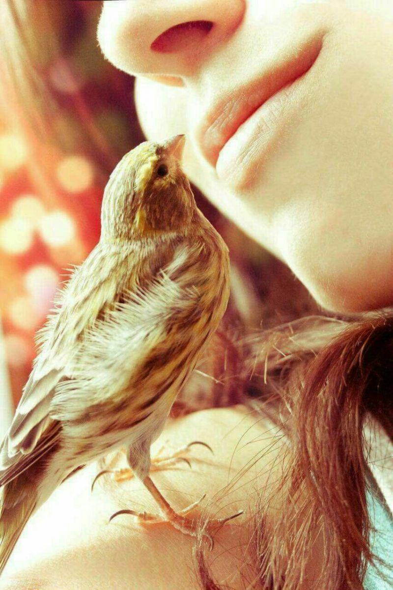 птица на щастието