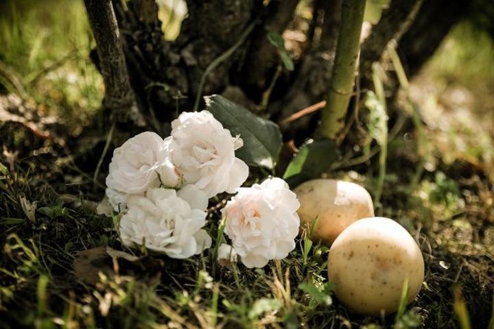 рози в картоф