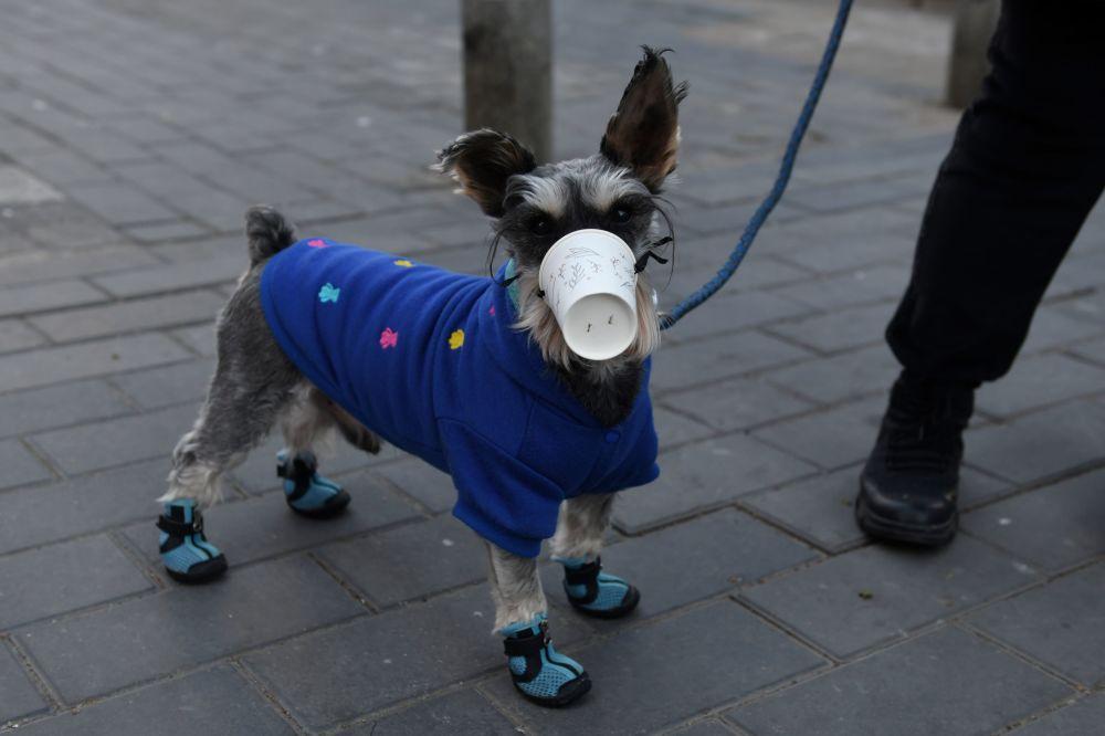 маска на куче