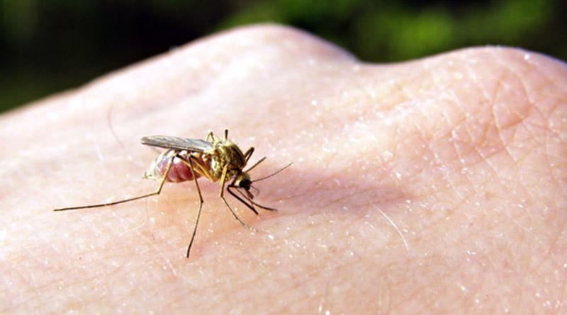 ухапване от комар