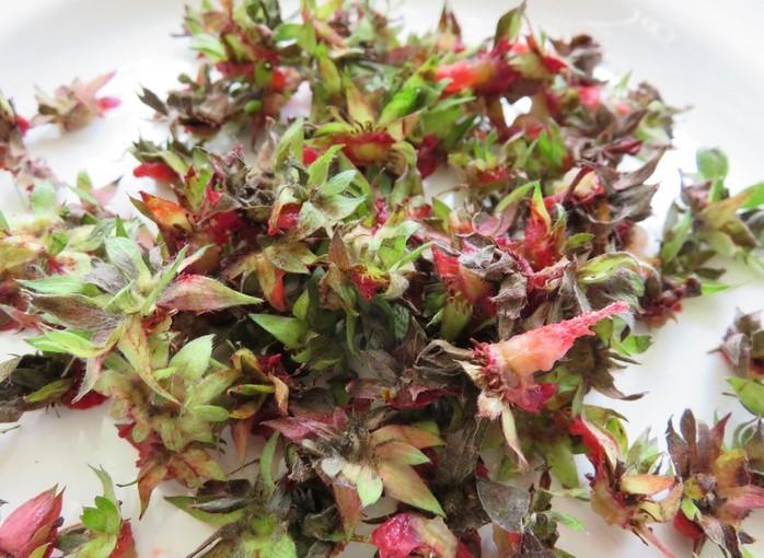 ягодови опашчици