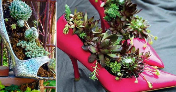 саксия в старите обувки