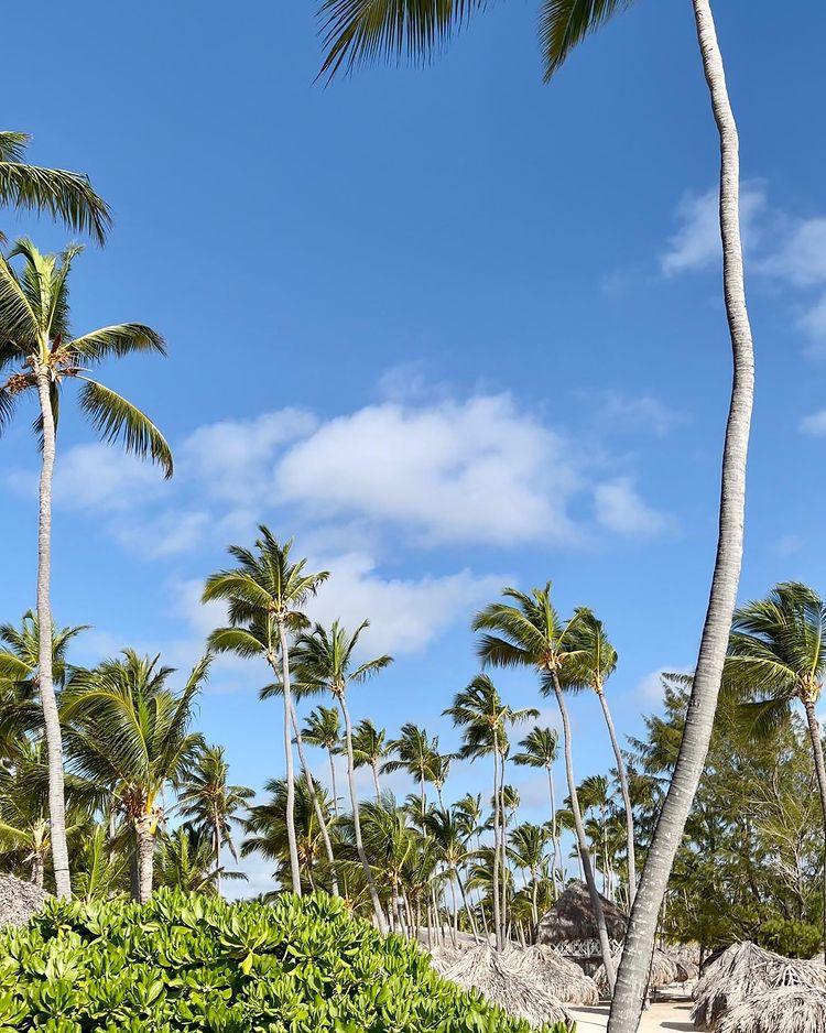 палми Доминикана