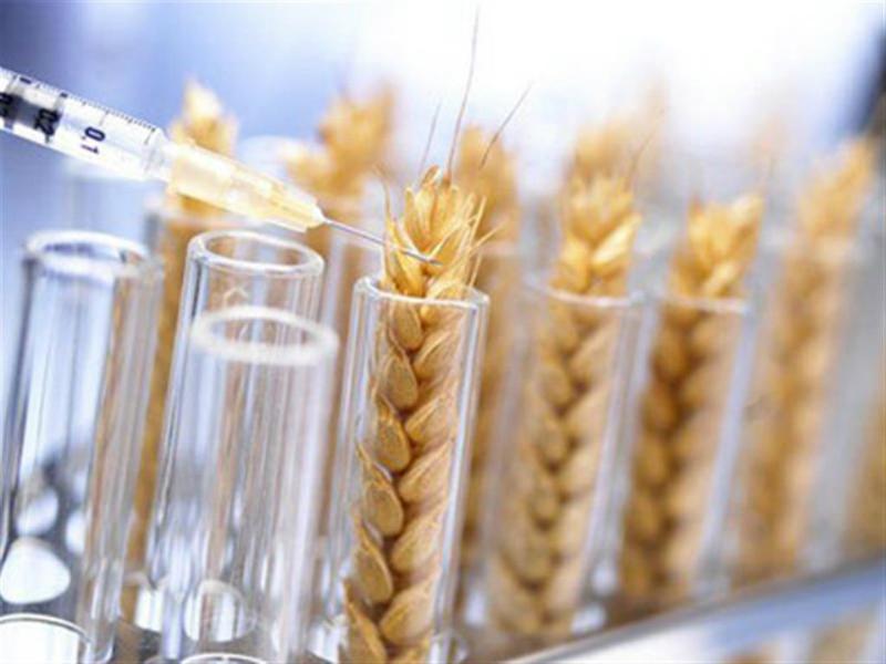 нови сортове на пшеницата