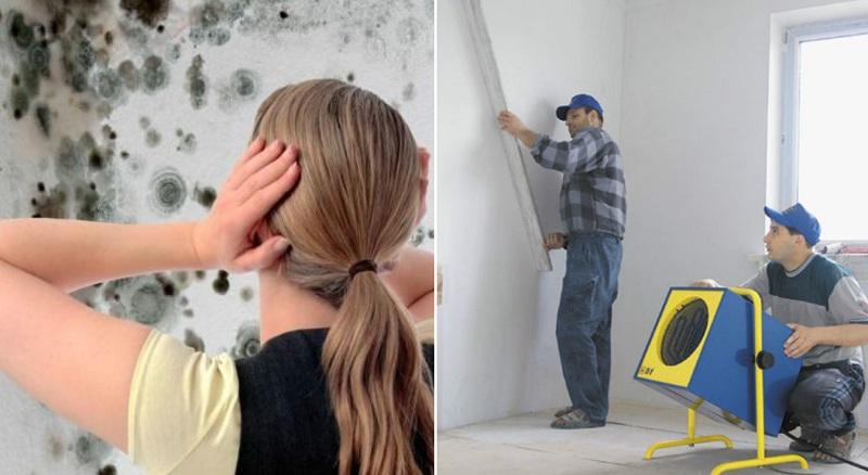 как да се отървем от мухъл по стените в къщата