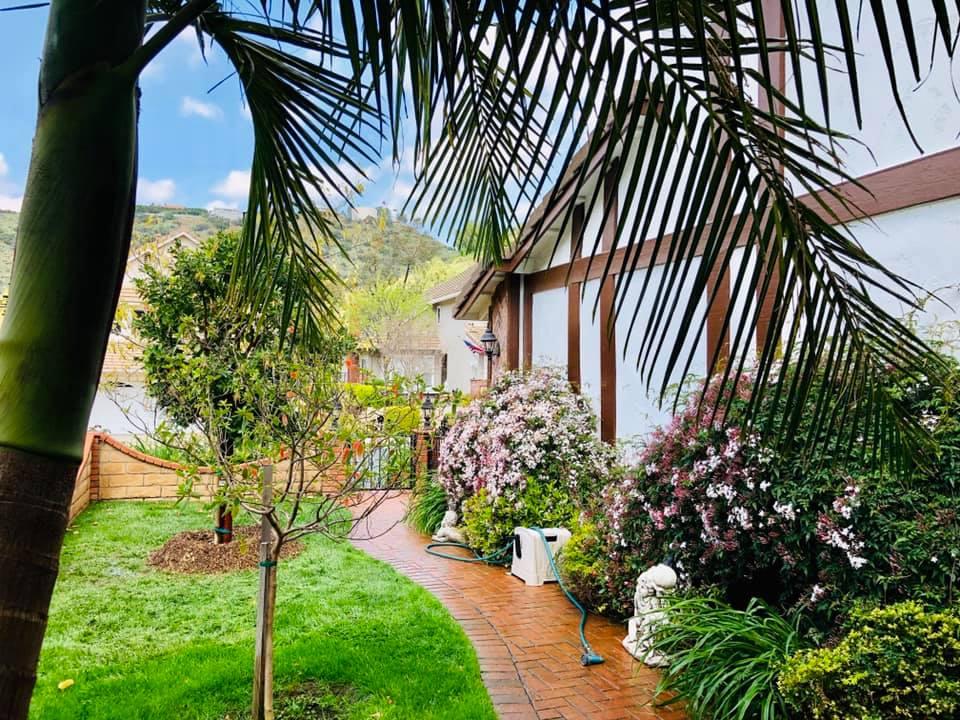 красив двор с палми