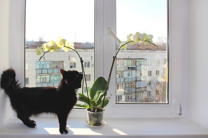 орхидея на перваза