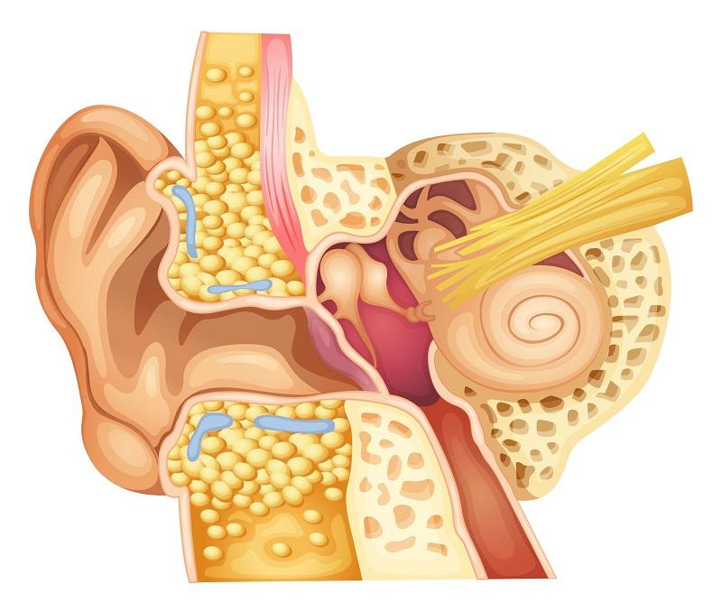 храни за подобряване на слуха