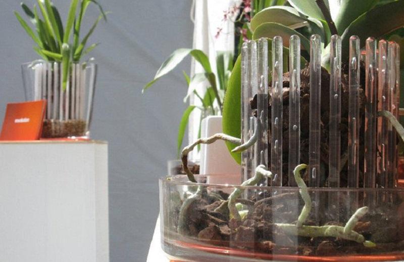 грижи за орхидеята у дома
