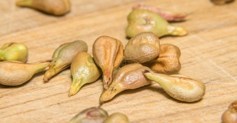 гроздови семки