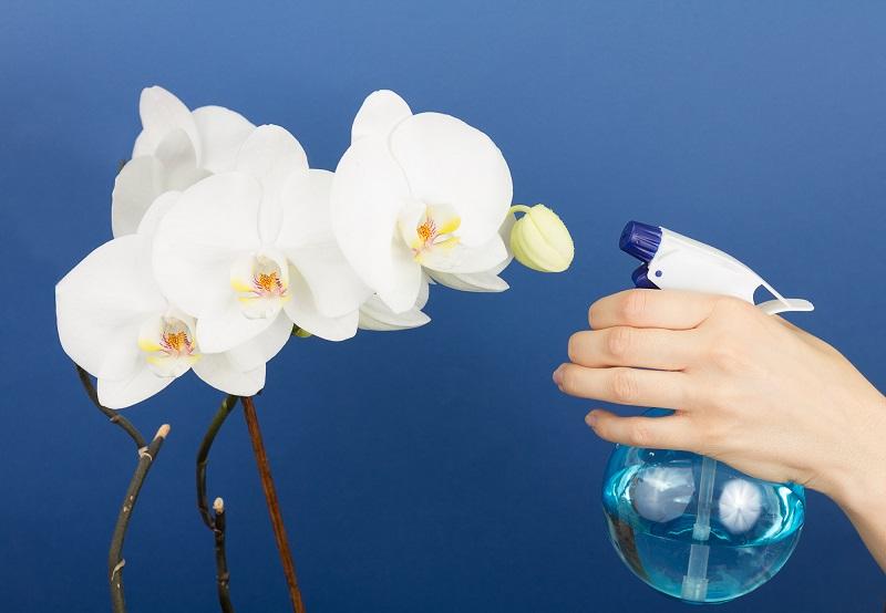 орхидея пръскане