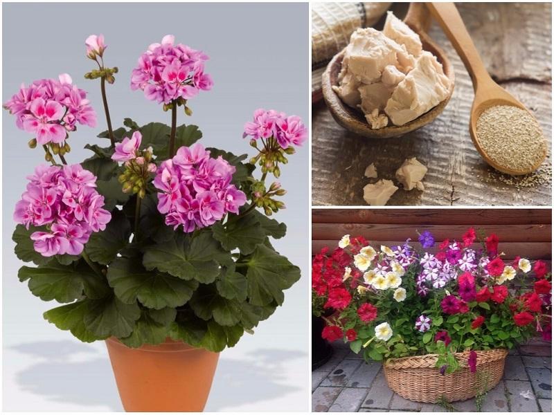мая за цветята