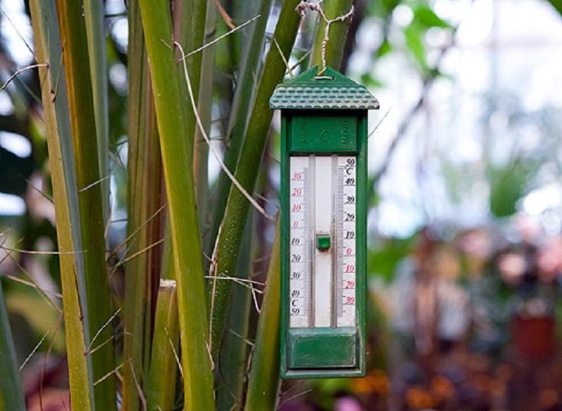 грижи за орхидеята у дома през зимата
