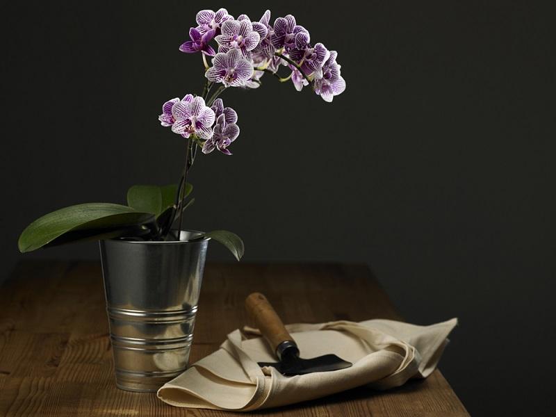 грижи за орхидеята