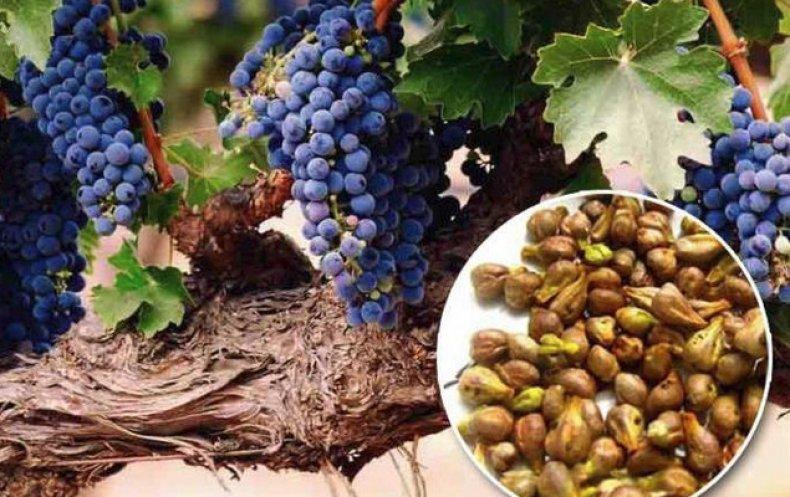 костилки грозде