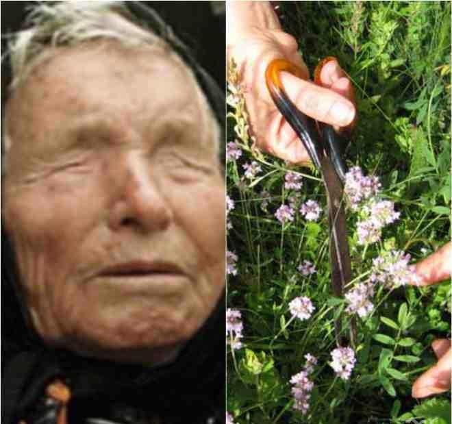 баба Ванга билки