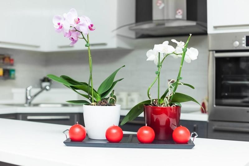 как правилно да гледаме орхидеята