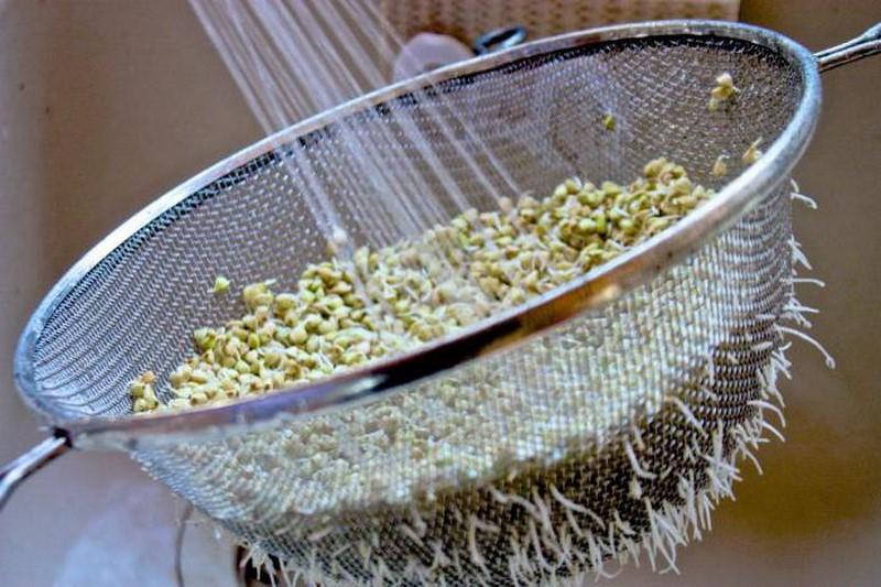 как да покълнете пшеницата у дома