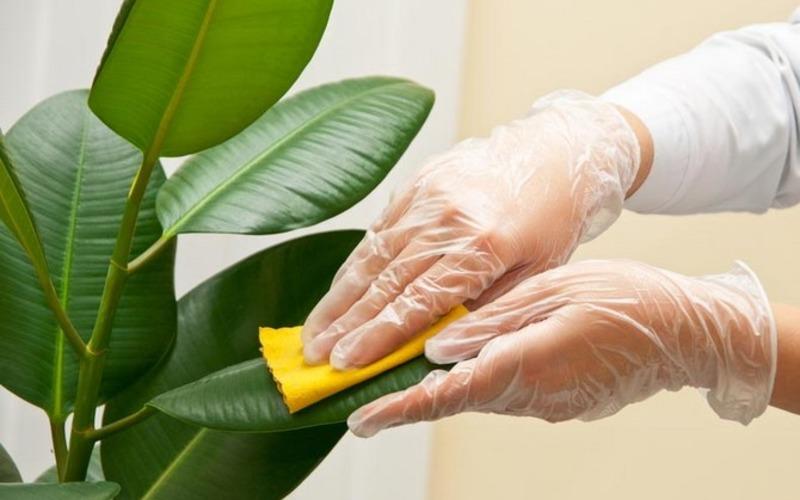 Как да подхраним домашните цветя