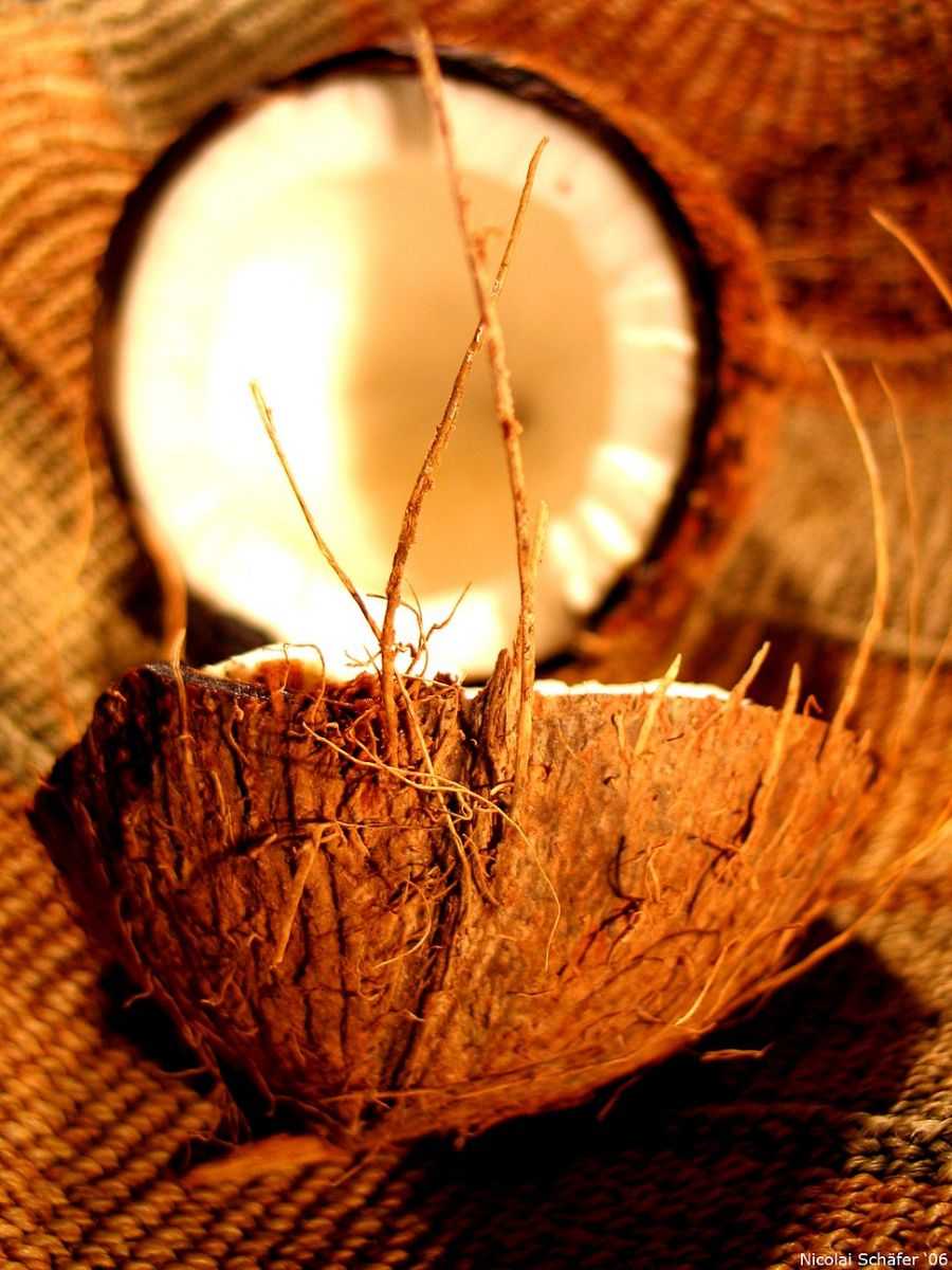 кокосов орех