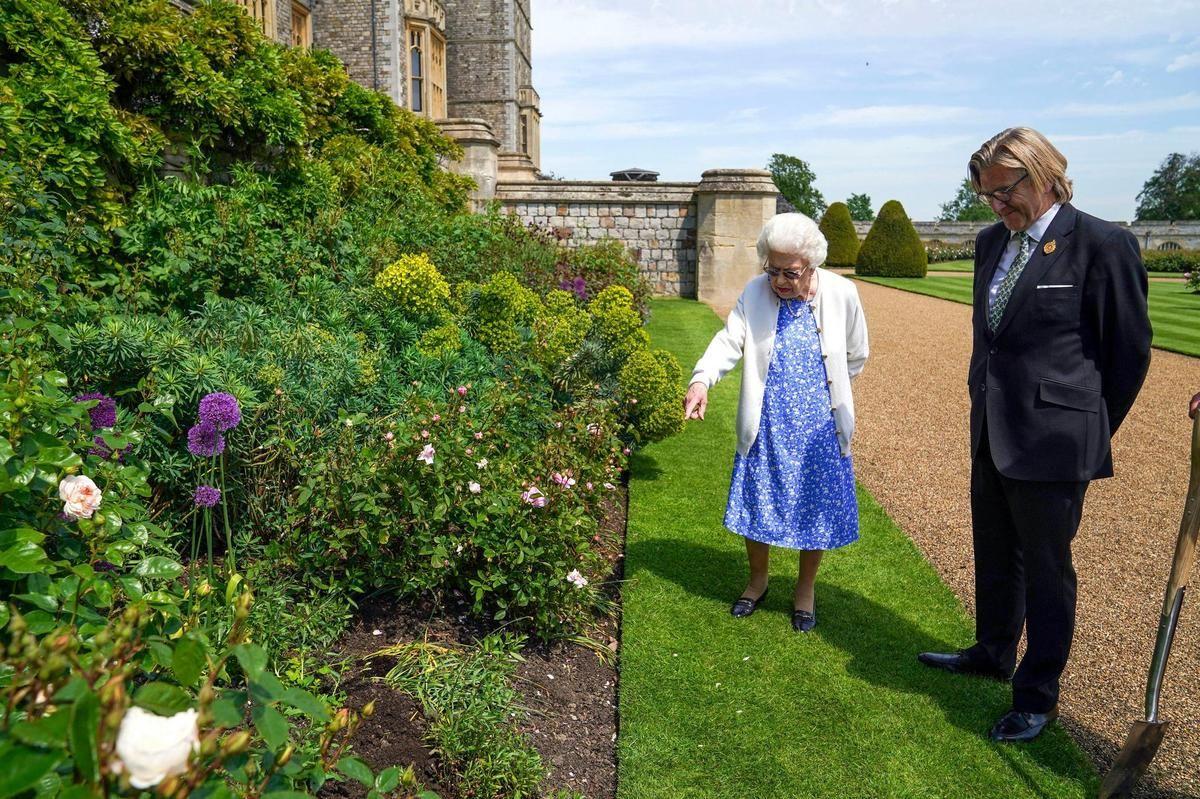 кралица Елизабет розова градина