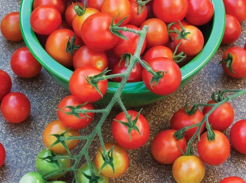 реколта от домати