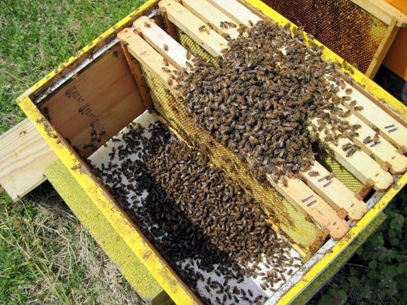 кошер с пчели