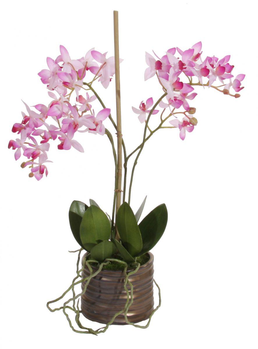 орхидея с красиви цветове