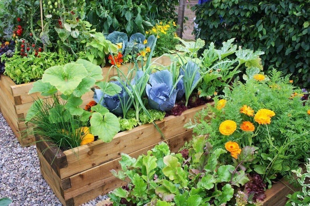Градински вредители и градина