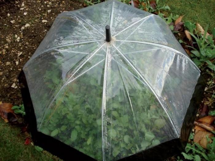 парник от стар чадър