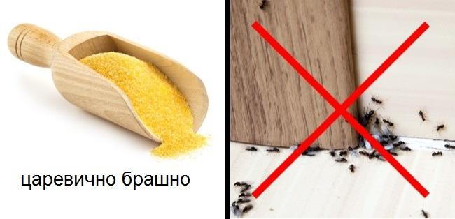 средство против мравки