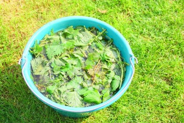 коприва при листни въшки