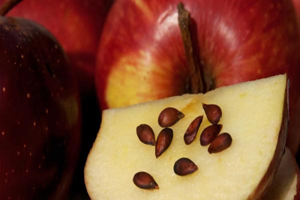 ябълкови семена