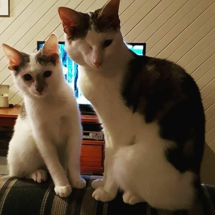 две котета