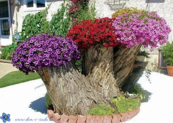 красива цветна леха