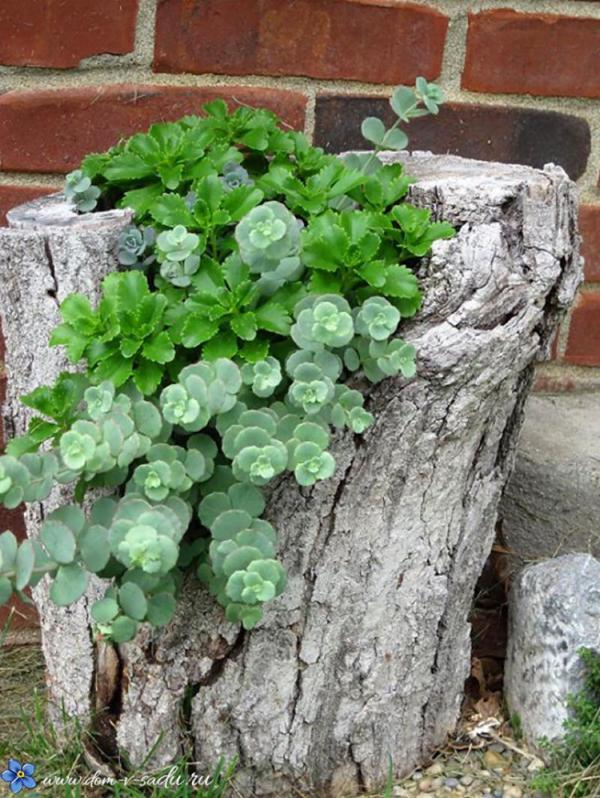 идеи за градина в пънче
