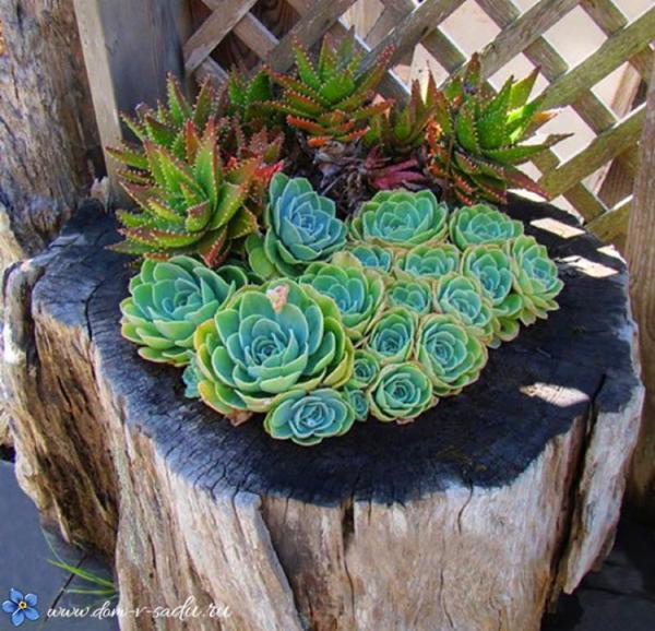 оригинална градина в пънче