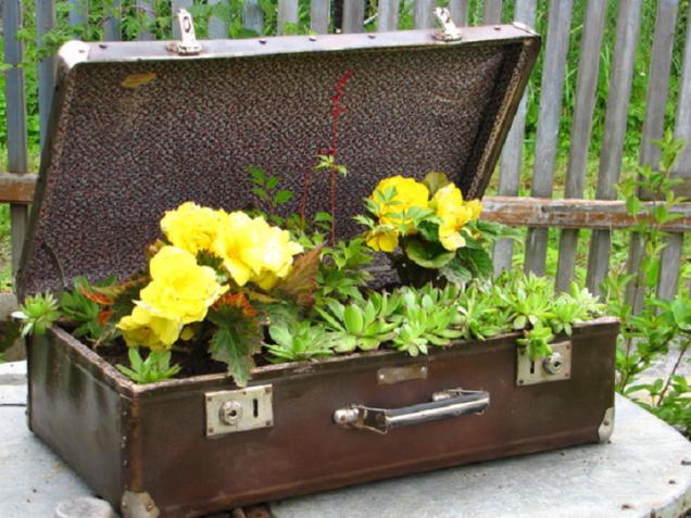 цветна леха в стария куфар