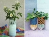 цветя и разсад