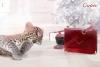 Зимна приказка 2013 от Cartier