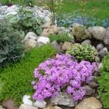 как се прави каменна градина