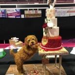 куче торта