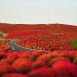 национален парк Хитачи