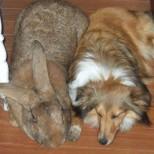 най- големия заек